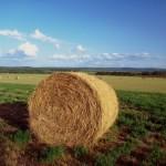 Provincia Medio Campidano, oltre 8mila ettari di superficie coltivata