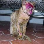 Il gatto torturato dai tre manovali, morto pochi giorni dopo le sevizie