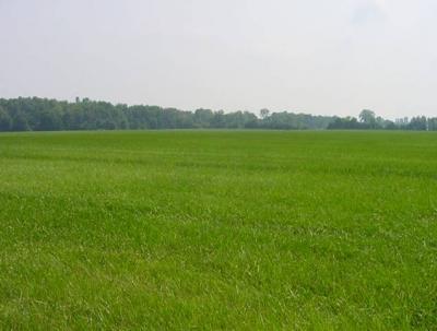 Terreni in affitto