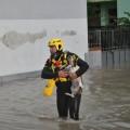 Cercasi cane salvato dall'alluvione