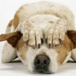 Botti di Capodanno ed effetti sugli animali