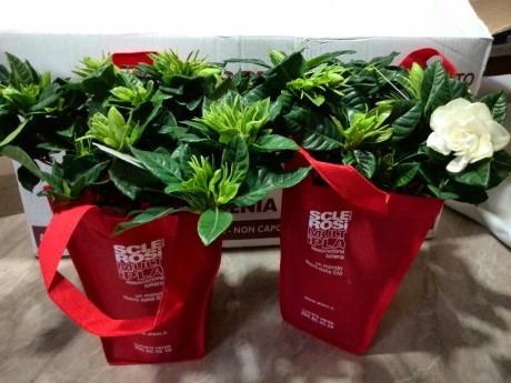 AISM: tante gardenie vendute a San Gavino