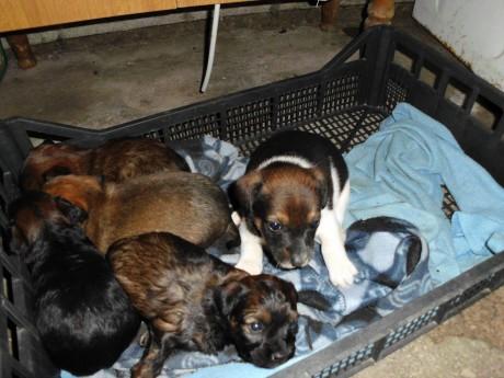Quattro cuccioli cercano casa