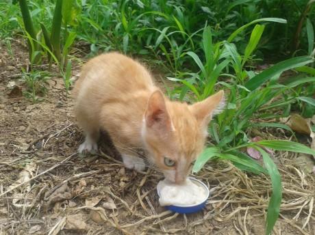 Gattino color miele cerca casa!