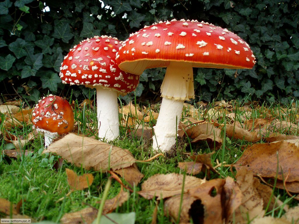 Corso Teorico E Pratico Per Riconoscere I Funghi San Gavino
