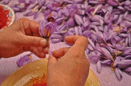 La mostra dello zafferano in un dipinto