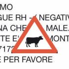 Attenzione alle bufale sulle ricerche di sangue