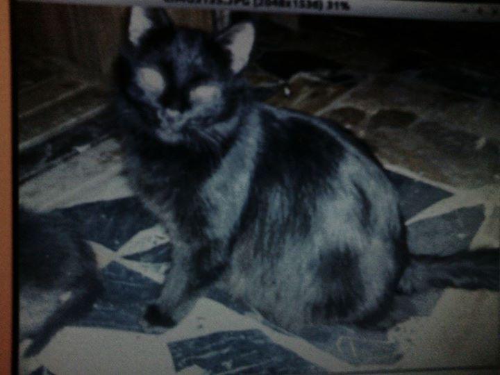Aiutateci a ritrovare questa gatta
