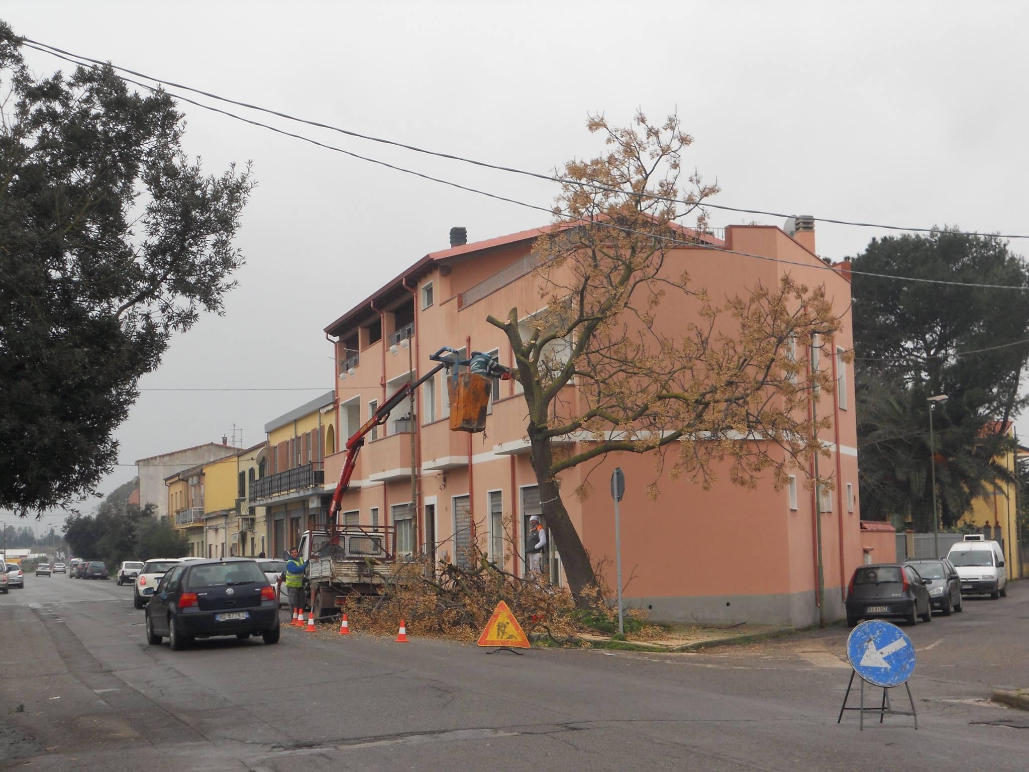 Via Villacidro: potatura, foto e polemiche