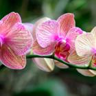 Mostra fotografica: le orchidee spontanee in Sardegna