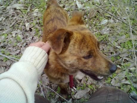 Il cane ritrovato dal nostro lettore