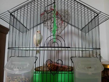 Cercasi proprietari di un uccellino smarrito