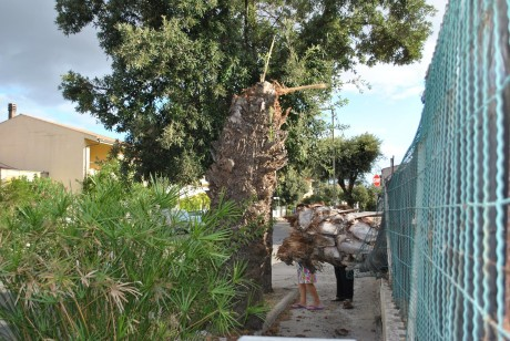 Palma caduta in via Villacidro