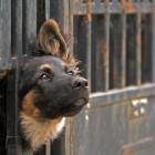 Incentivi comunali per l'adozione di cani randagi