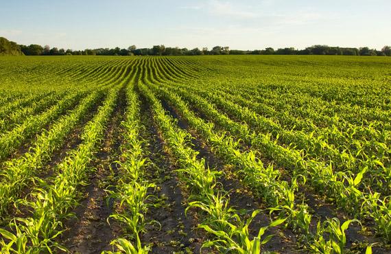 Agricoltura biologica in Italia: opportunità e prospettive