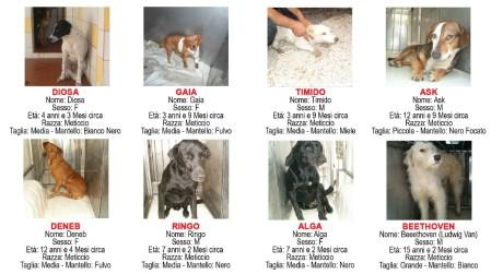 Incentivi economici per l'adozione di cani randagi