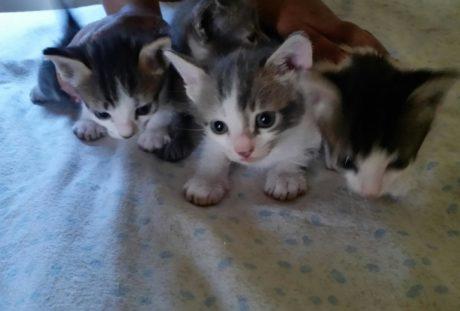 Quattro micini cercano casa