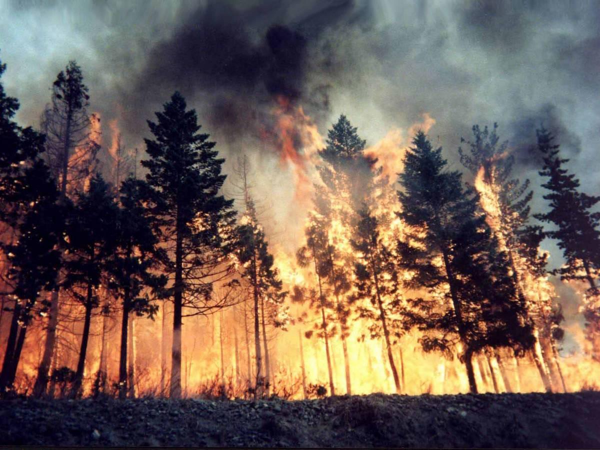 Incendi boschivi, una giornata