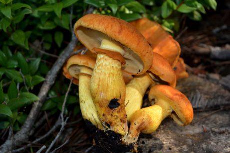 Autunno, stagione dei funghi: ma forse non tutti sanno che...