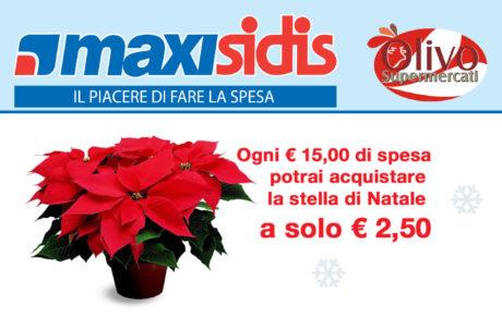 Offerta Stella di Natale - Olivo Supermercati