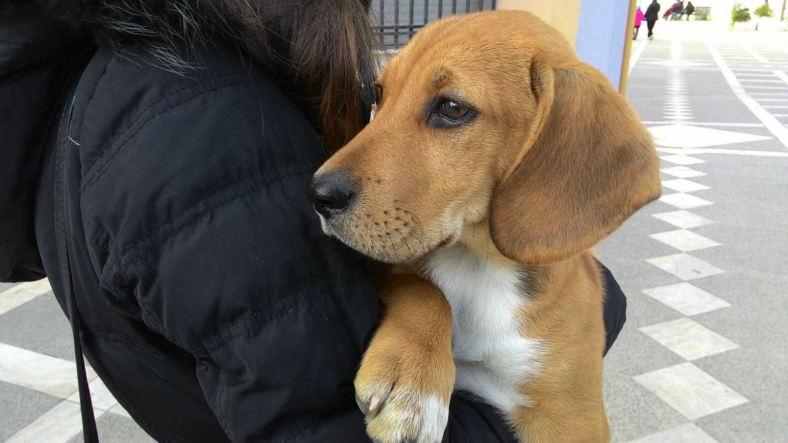 Ritrovato cane in via Roma, si cerca il proprietario