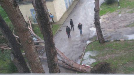 Allerta meteo, cade albero nel parcheggio dell'Ospedale