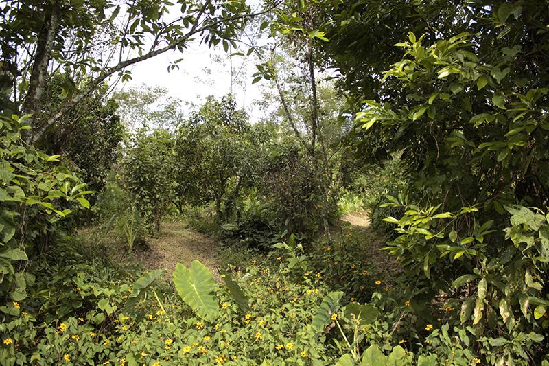 Corso di Food Forest a San Gavino Monreale