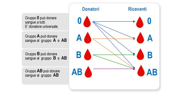 AVIS, tutto quel che c'è da sapere su donazione e gruppi sanguigni