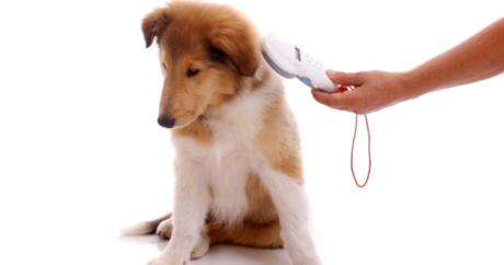 Campagna di anagrafatura dei cani