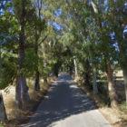 Potatura alberi, via Tuveri chiusa dal 26 aprile all'11 maggio