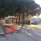 Via Convento, verranno tagliati i pini lungo la strada