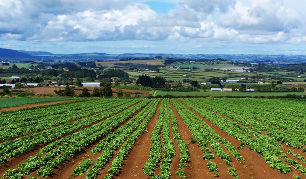 L'agosto più piovoso di sempre sta mandando ko l'agricoltura