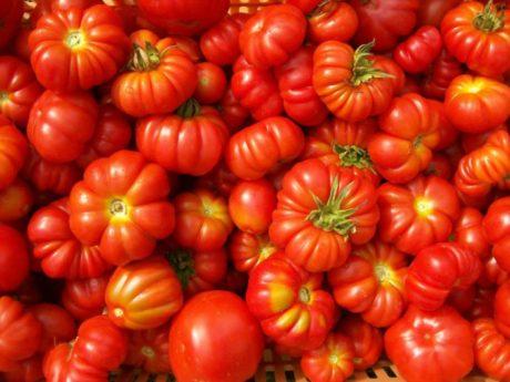Coldiretti Sardegna. Arriva l'etichetta di origine per i derivati del pomodoro