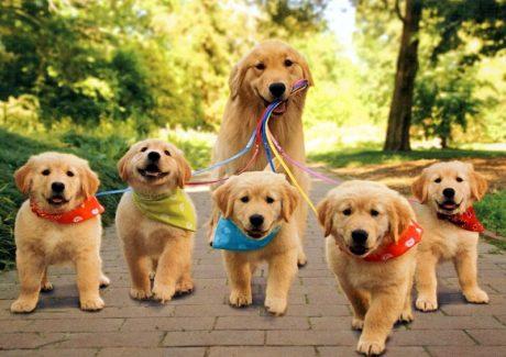 Sterilizzazione dei cani