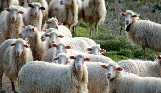 Protesta dei pastori sardi, la solidarietà dei commercianti sangavinesi