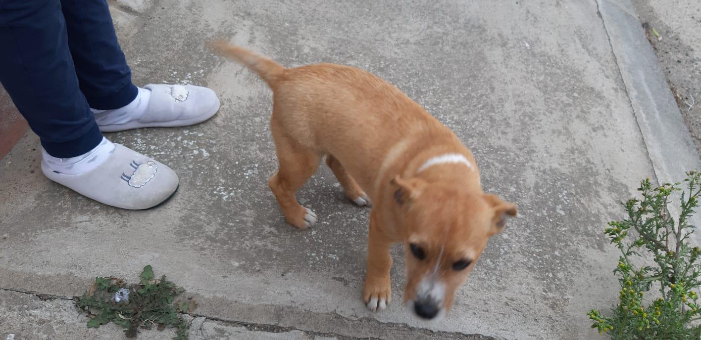 Cucciolo smarrito cerca casa