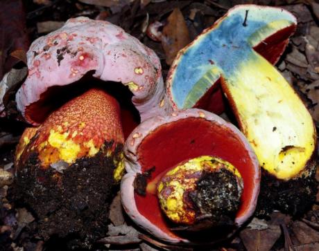 Autunno, la stagione dei funghi: un corso teorico/pratico per riconoscerli