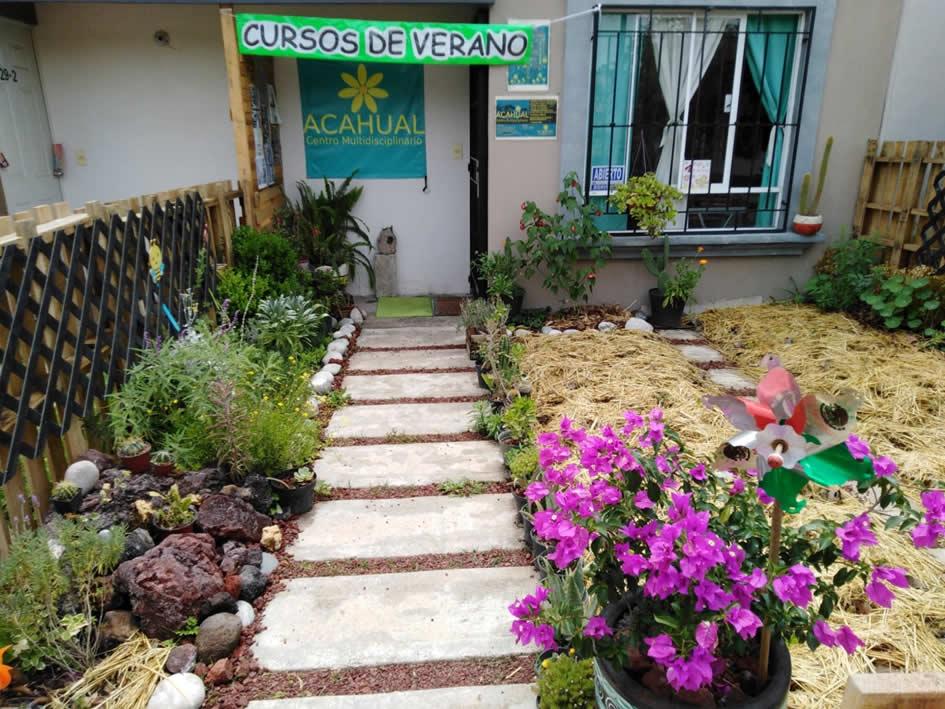 L'immagine può contenere: pianta, fiore e spazio all'aperto
