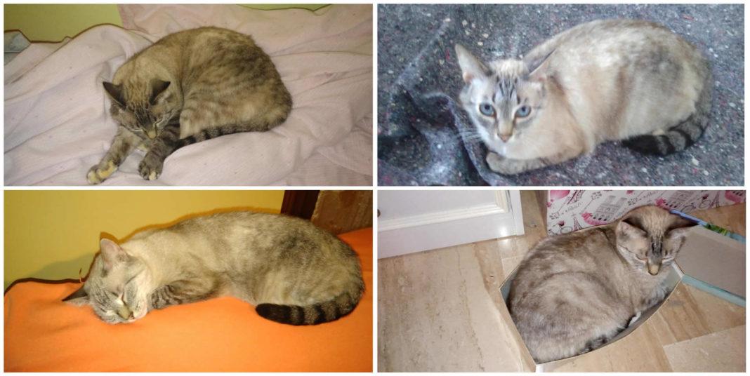 Aiutateci a ritrovare Sofia