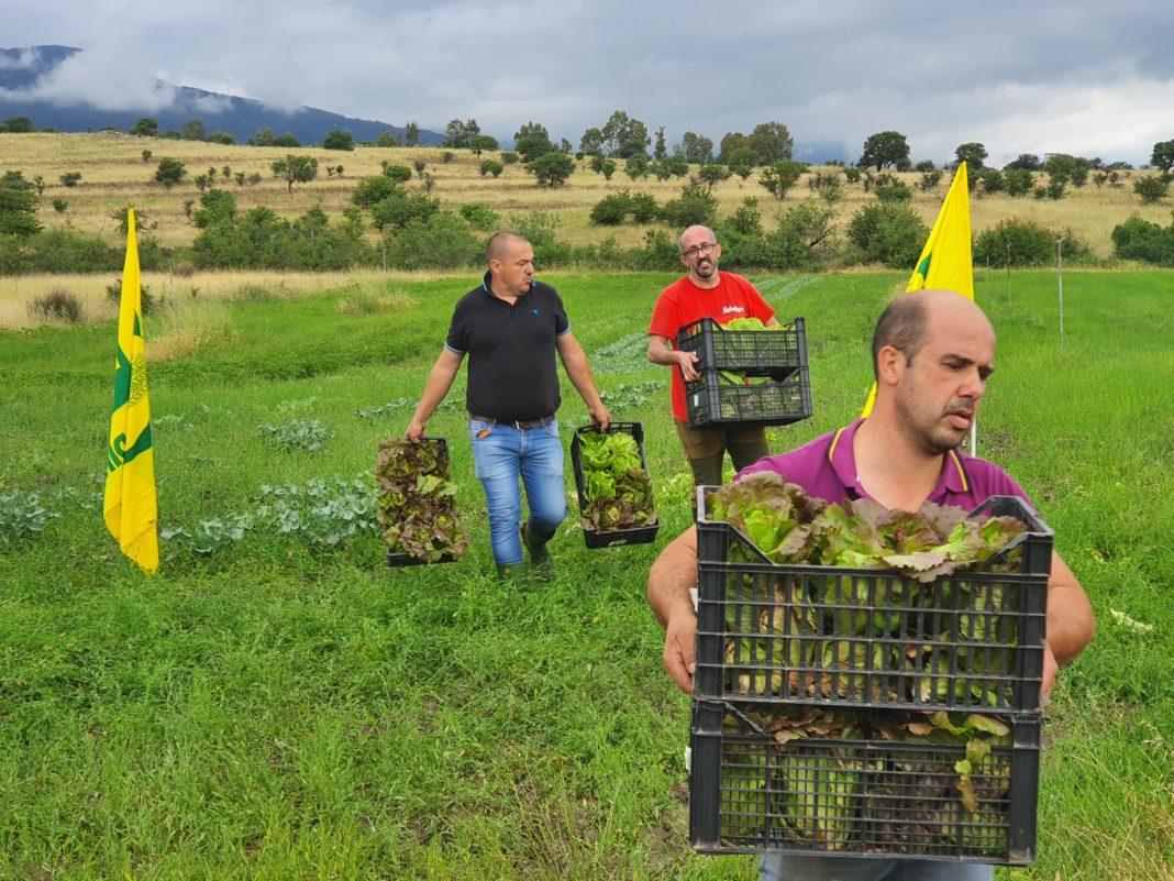 Nella foto Giovanni Mureddu (in primo piano) insieme ai due colleghi, ieri mentre raccoglievano i prodotti donati alla Caritas
