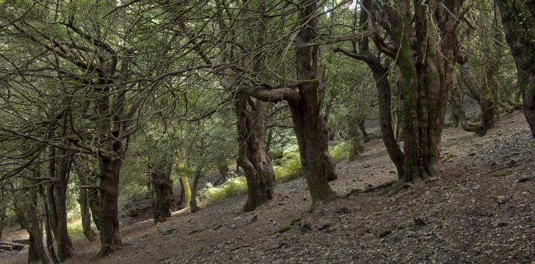 Coldiretti, in Sardegna chiesto lo stato di calamità per gli incendi