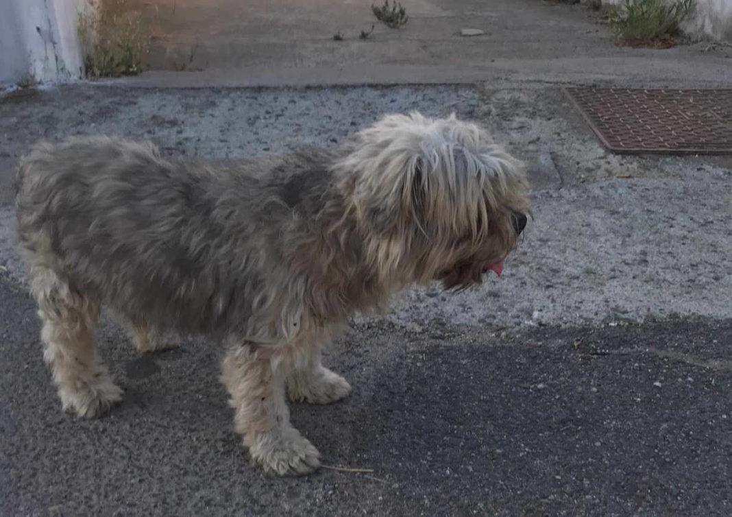 Trovato cane a San Gavino, si cercano i proprietari