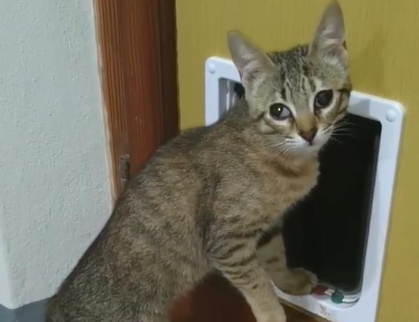 Cercasi gattina smarrita in zona