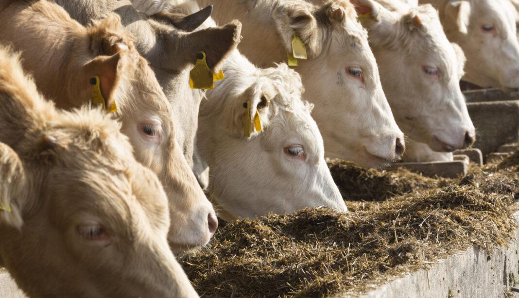 Coldiretti Sardegna, al via le domande di rimborso del PCR per gli allevatori