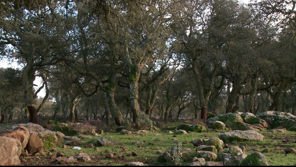 Patrimonio boschivo, proroga dei termini per i lavori realizzati dai comuni