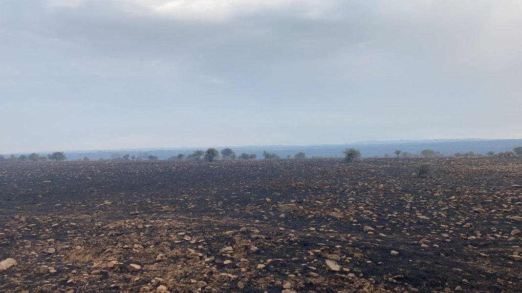 Incendi in Sardegna, campagne sotto assedio: oltre ai boschi persi bestiame, fienili e pascoli