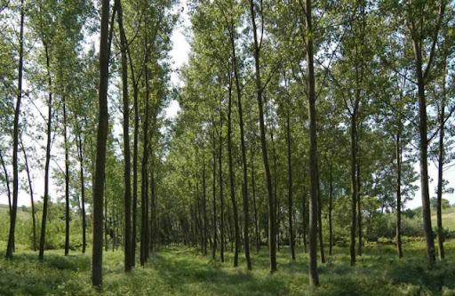 Forestazione, a settembre un laboratorio a Monte Arci per formare professionisti del rimboschimento