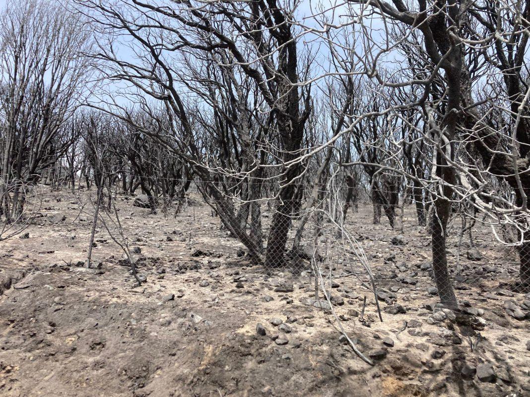 Incendi in Sardegna, Coldiretti: