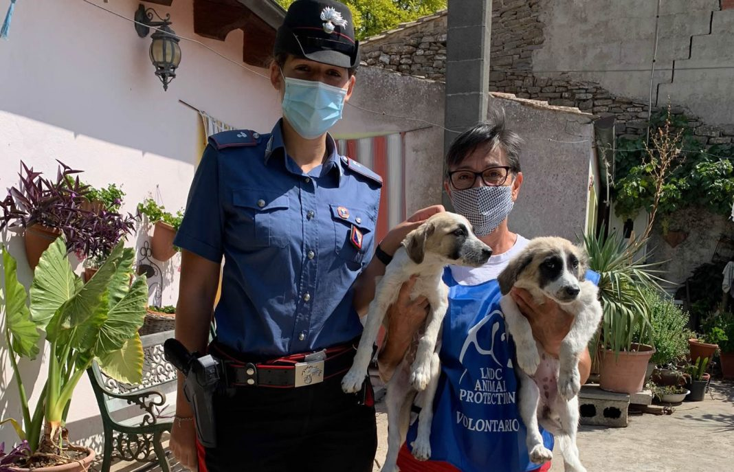 Storia a lieto fine: i cuccioli di Mandas affidati ai volontari